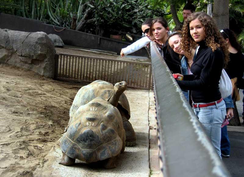 Sd2004 zoo for Acquario tartarughe grandi